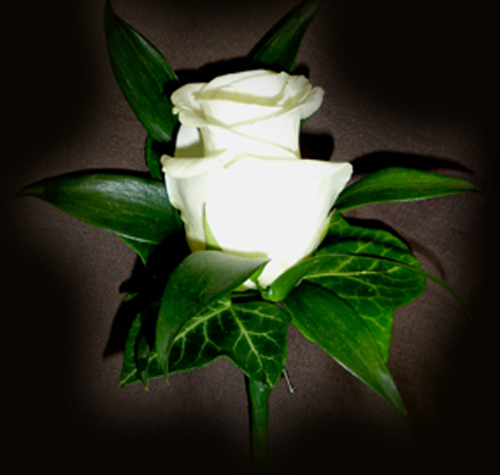 Single White Rose Buttonhole