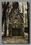Forgotten in the Woods
