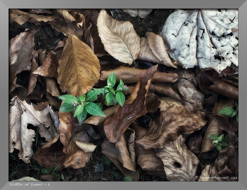 Scatter of Leaves - 3
