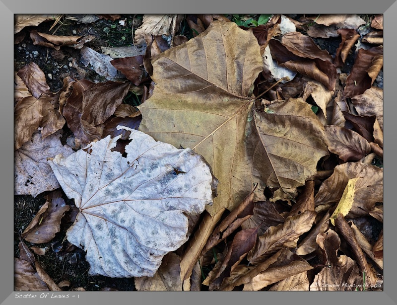 Scatter of Leaves - 1