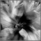 Turning Petals