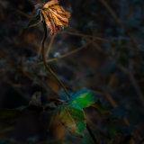 Winter Blossom 2