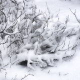 Winter Tangle