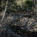 DSC3448-1373-1374  Spring Beaver Dam