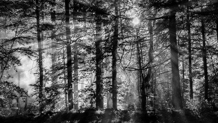 Light, Mt. Tobias