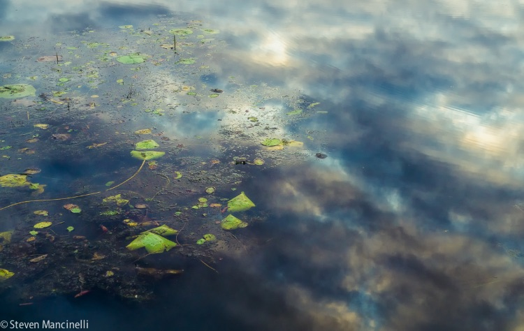 Sky And Water Lilies