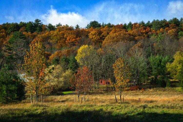 Autumn Farm, Ohayo Mountain