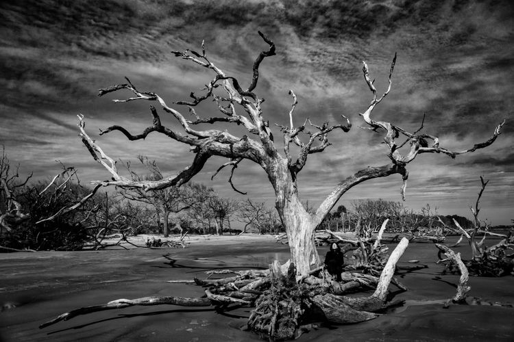 The Tortured Tree