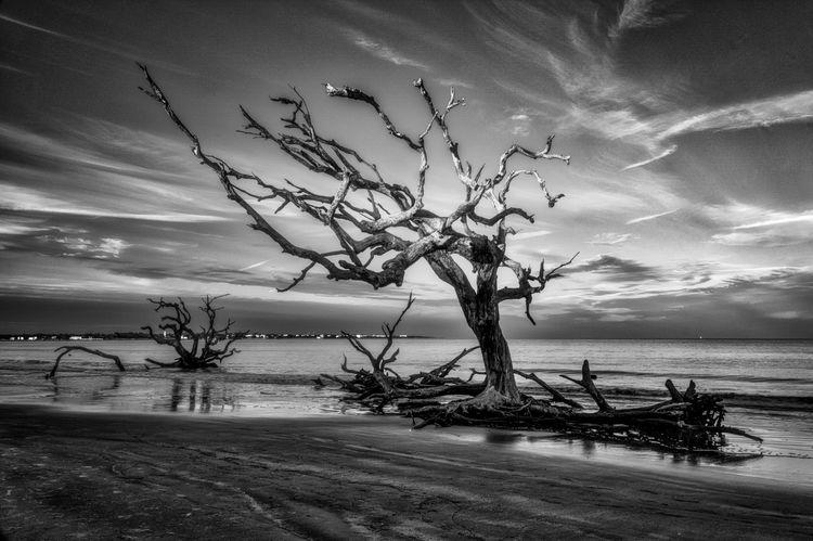 Tortured Tree At Last Light