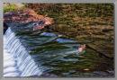 Spillway Flow