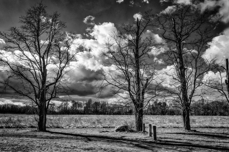 Posts, Trees And Field In January