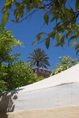 Alhambra Palm