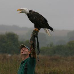Bald Eagle (1)