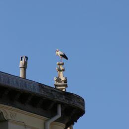 Sergovia Stork