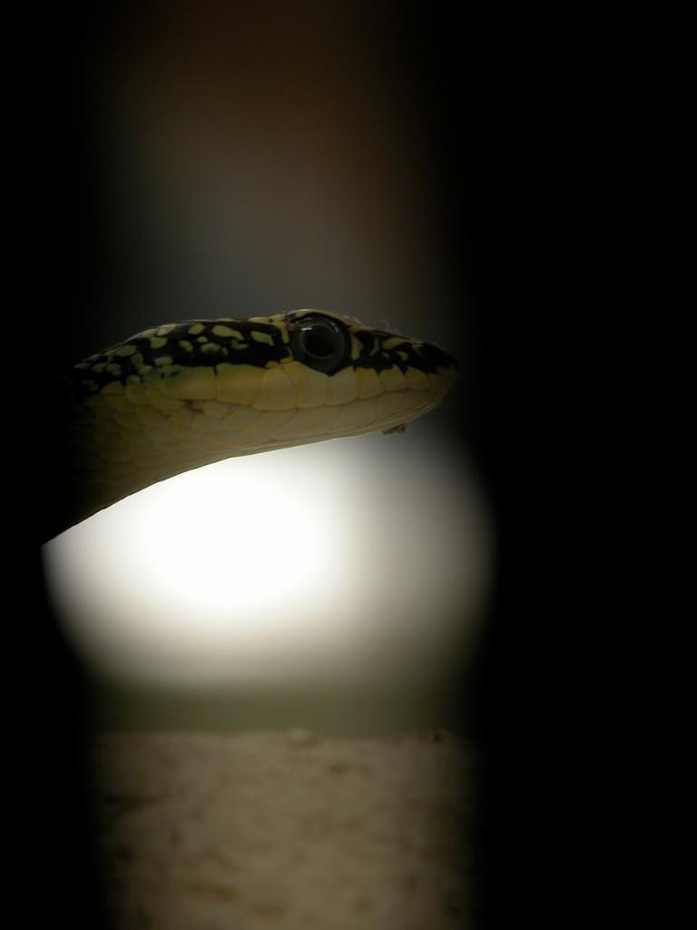 Snake on the Windowsill!