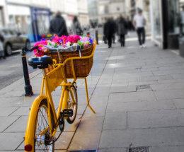 Flowers by bike, Bath