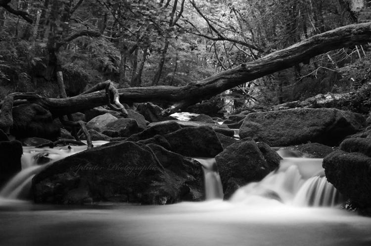 Golitha Falls.