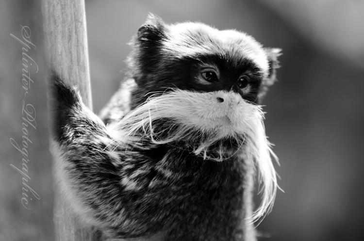 Best animal moustache