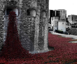 Field of Poppies Tower of London.