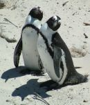 Mr & Mrs Penguin