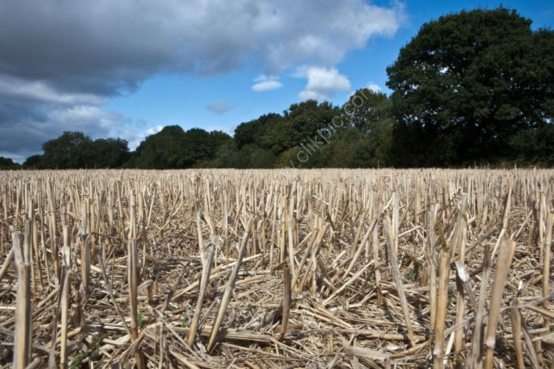 Field of stubble