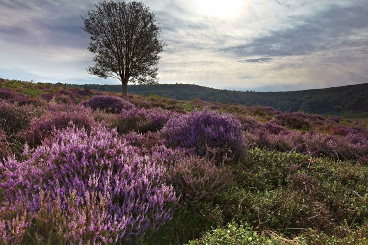 Heather Hole Of Horcum