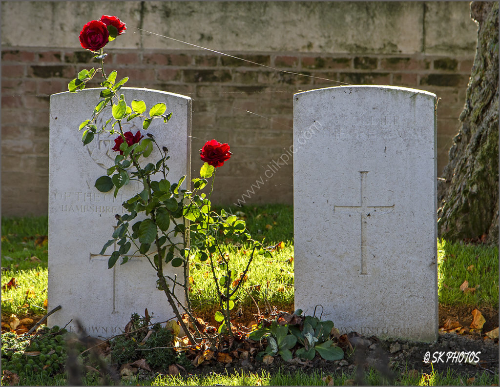 Cobwebs and Roses...Soldiers of the Great War. Ancre British Cemetery.