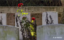 Cobwebs and Roses...Soldiers of the Great War. Ancre British Cemetery, Somme.