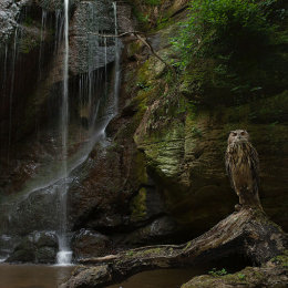 2 Owl and Waterfall