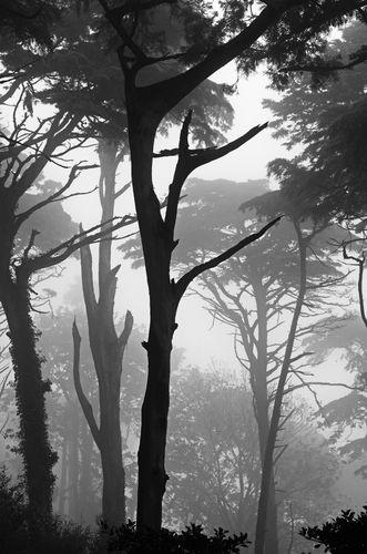 Sintra trees