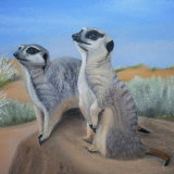 'Kalahari Kats'
