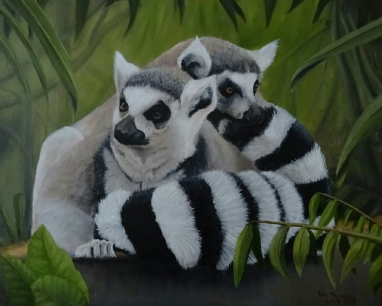 "'Howay the Lads' Ring tailed Lemurs in the forests of Madagascar. Oil on Canvas. 20"" x 16"" by Steve Thorley 2017"