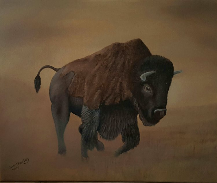 """'High Plains Drifter' A North American Bison roams the plains of Yellowstone, Montana. Oil on Canvas. 20"""" x 16"""" by Steve Thorley"""
