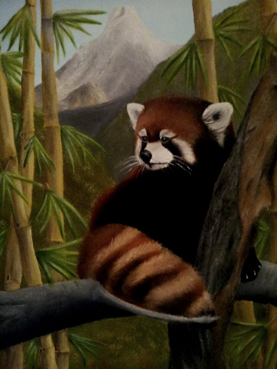"""'Anapurnan Hideaway' A reclusive Red Panda in the bamboo forests of the Anapurna foothills. Oil on Canvas 20"""" x 16"""" By Steve Thorley."""
