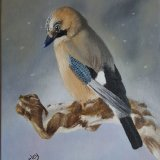 """ A winters Jay"""