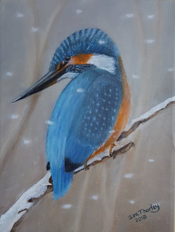 """Winter from the riverbank"" A Kingfisher waits patiently for the time to strike. Oil on Canvas 12"" x 9"" By Steve Thorley 2018."