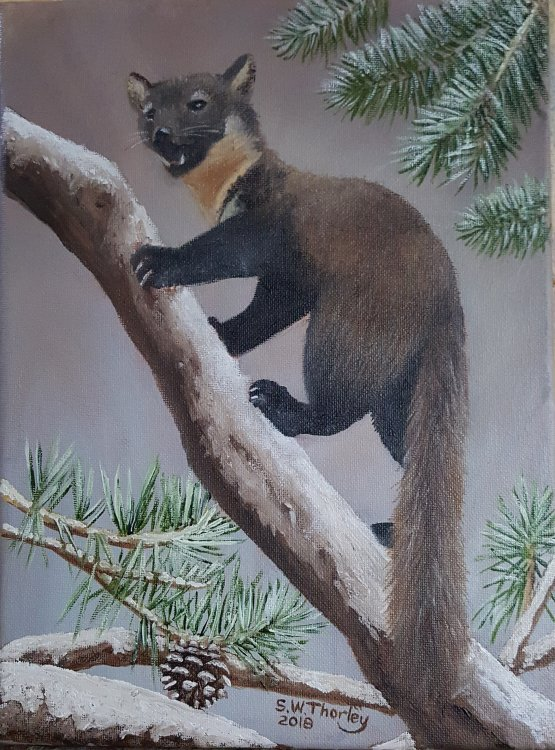"""""""The Pine Marten"""" Recently only found in Scotland but increased numbers have seen a migration south to England and Wales restricting the population of the alien Grey Squirrel whilst Red Squirrel numbers are on the rise. Oil on Italian Canvas 12"""" x 9"""" By Steve Thorley 2018"""