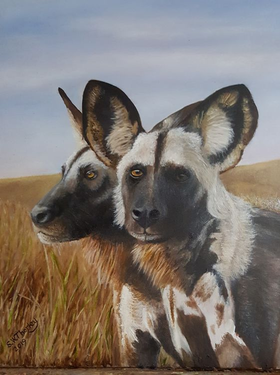 """Painted Wolves"" The Wild Dogs of Africa."