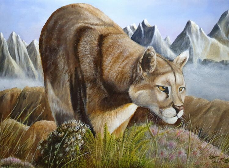 """Patagonian Puma"".With the cathedral like spires of the Southern Andes dominating the landscape of the Chilean side of Patagonia a solitary Puma explores a ridge of alpine flowers and grasses. Oil on Italian Canvas 50cm x 70cm. By Steve Thorley 2020"