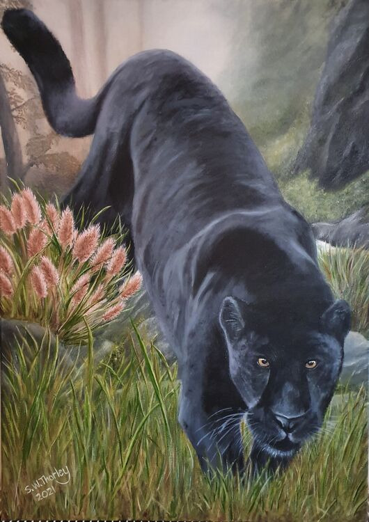 """The Dark Invader"" A Black Panther in the rain forests of Myanmar (Burma). Oil on Italian Canvas 70cm X 50cmil."