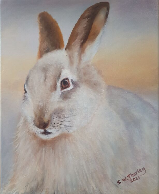 """""""The Ghost of the Glen"""". A Mountain Hare (Lepus Timidus) in full winter coat in the highlands of Scotland 12"""" x 9"""" Oil on Italian Canvas by Steve Thorley"""