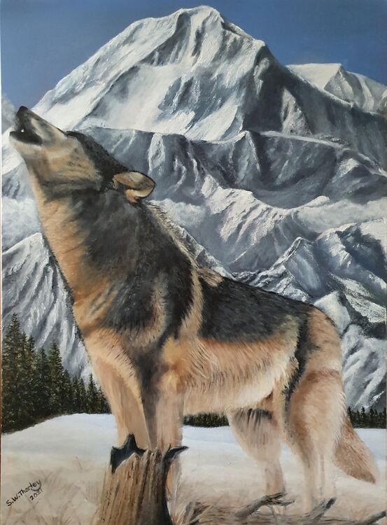 """""""Call of the Wild"""". A Grey Wolf 'making the call' with Mount McKinley as the backdrop. A howl of a Grey Wolf is a way of communication over considerable distances for these very social animals. It can indicate many factors such as location, predator warnings and prey positions plus many more reasons than those we know. Oil on Italian Canvas 70cm x 50cm"""