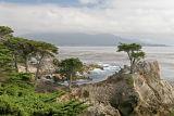 The Lone Cypress - Monterey