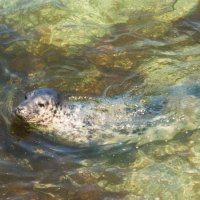 Grey Seal 7341