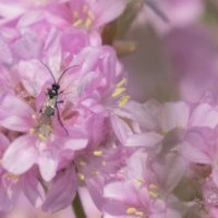 Insect on Pink Flower-7081
