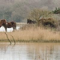 Ponies Stanpit-8817
