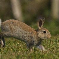 Rabbit 2-7848