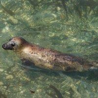 Seal Godrevy-7284