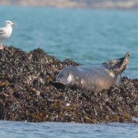 Seal leave me in peace-7564