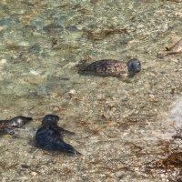Seals group-7467